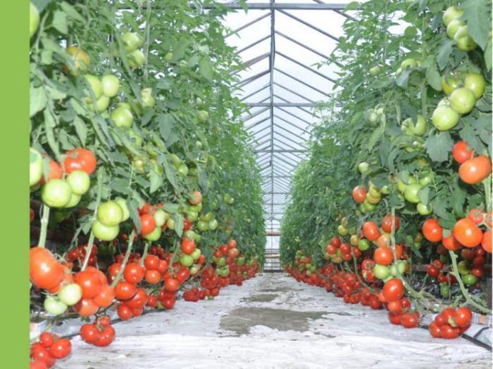 Увеличение в средните добиви от праскови круши и малини
