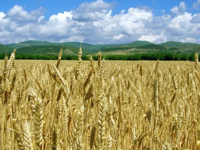 От началото на 2017/18 г. страната е изнесла с 30% повече зърно