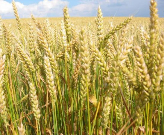 Вижте изпратените до ЕК нотификации за Директни плащания 2015 в сектор земеделие