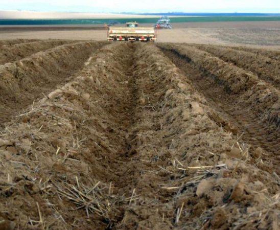В срок до 20 юни земеделските стопани трябва да представят фактури закупените и приложени продукти за растителна защита