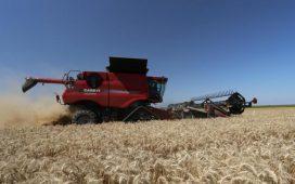 Комбайнът CASE IH 9230 Axial Flowожъна 460 декара с пшеница за 5 часа