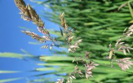 Промоционалните програми са по Регламент (ЕО) № 3/2008 и 501/2008 и включват дейности по предоставяне на информация за земеделски и хранителни продукти и методите за тяхното производство