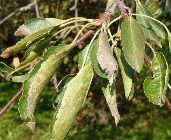 До 25.02.2015 г. На сайта на Министерството на земеделието и храните е публикуван списък на необходимите за разрешаване продукти за растителна защита (ПРЗ) за контрол на вредителите по растенията