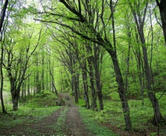 ДФЗ одобри 66 проекта по мярка 226 Възстановяване на горския потенциал