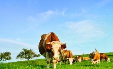 Схема на ДФЗ за договорни отношения в сектор мляко