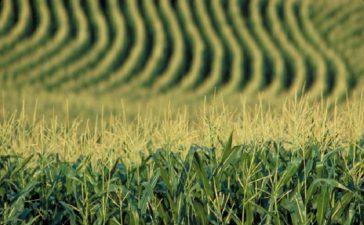 Излезе от печат Допълнение към Списък на разрешените за пускане на пазара и употреба продукти за растителна защита