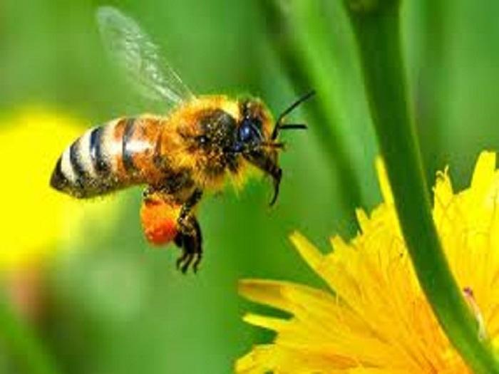 От понеделник (4 юли 2011г.) пчеларите могат да кандидатстват за купуване на кошери по Националната пчеларска програма