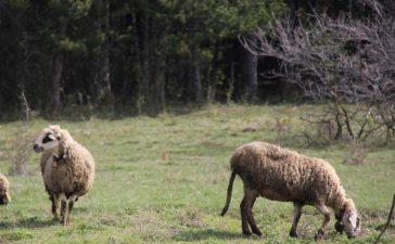Животновъдите подават Заявление за форсмажор в областните структури на ДФЗ