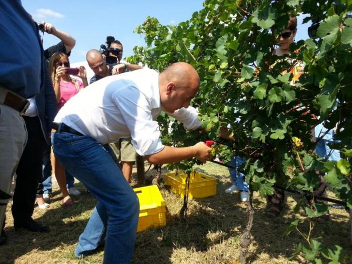 Oчакваната реколта от грозде тази година е около 200 000 тона