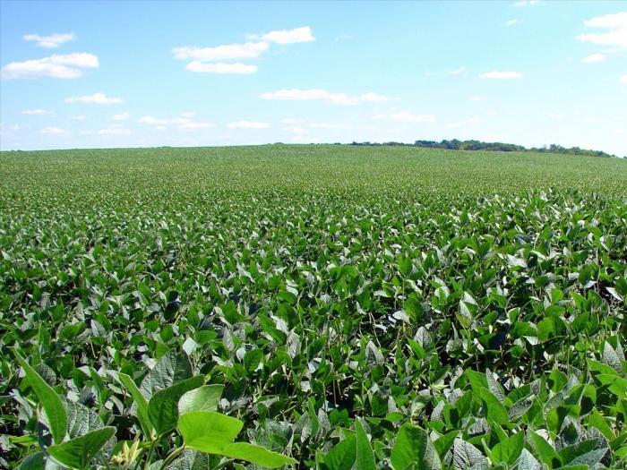 Бразилия може да разшири обработваемите площи със соя
