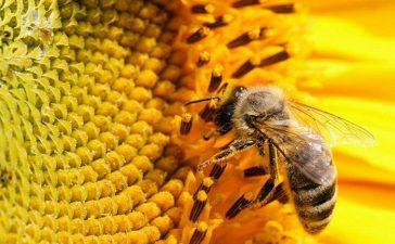 Размерът на подпомагане на пчелно семейство е до 7 лева.