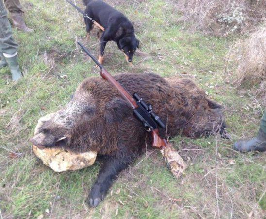ИАГ подготвя изменения в Закона за лова и опазване на дивеча