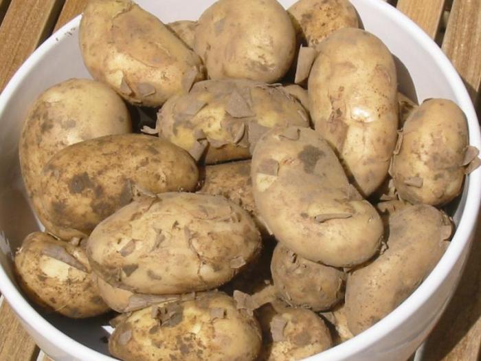 Болести по време на съхранението по картофите