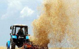 Най-късно до 10 дни пшеницата ще бъде прибрана