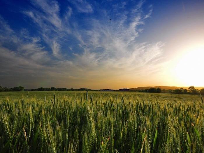 Фермерите трябва да представят уведомителни писма при третиране на посевите с вегетационни хербициди и инсектициди