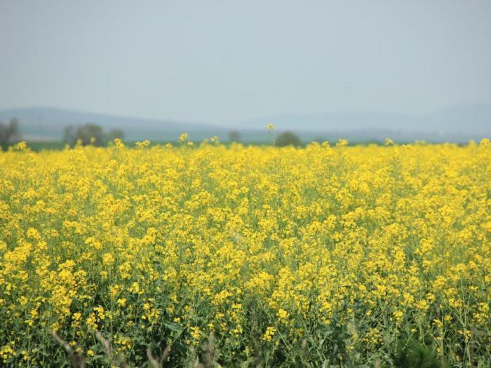 В края на юни ще бъде отворена Мярка 6.1 Стартова помощ за млади земеделски стопани