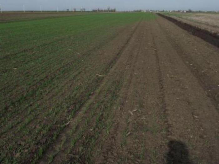 обработките на почвата и борбата с житните плевели