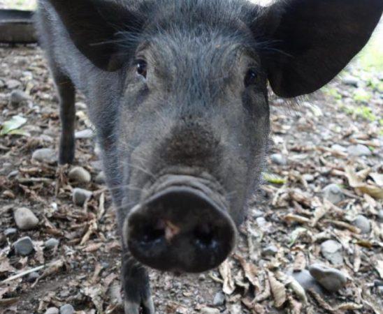 Пожарите в Югозападна България оказаха влияние върху местообитанията на животните