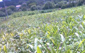 Спад в обработваемите площи в Бразилия ще доведе до по-слаба реколта