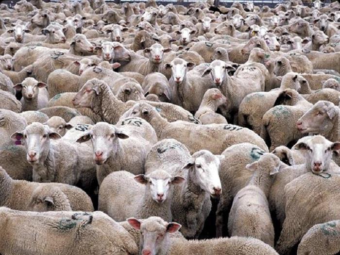 Препоръчва се извършване на клинични прегледи през две седмици на овцете и козите