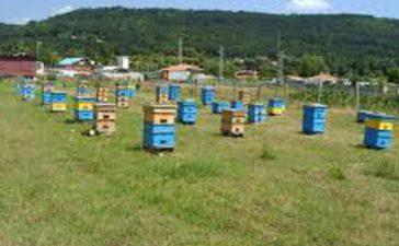 Кандидатите трябва да осигурят преместването на поне  25 пчелни семейства на най-малко две сезонни места