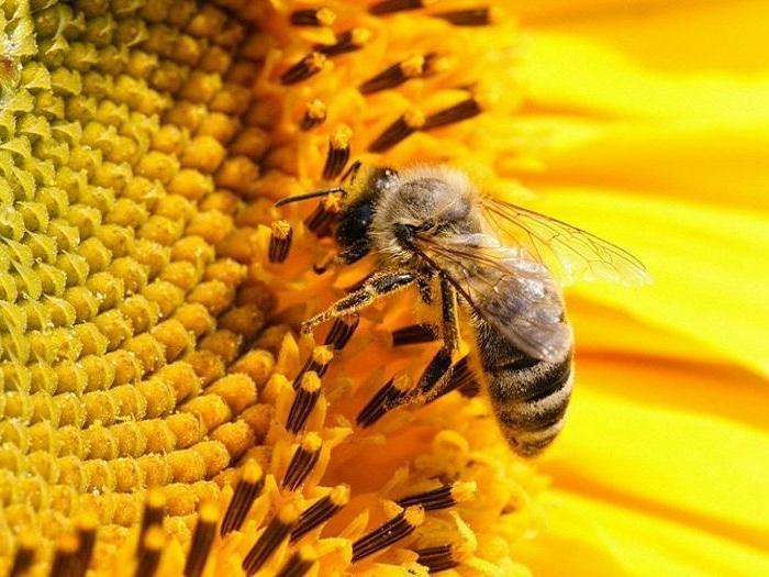 Над 1 700 пчелари са подали заявление за подпомагане по пчеларската програма за 2018 г.