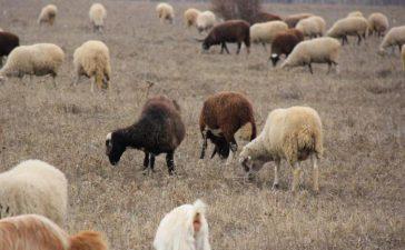 Броят на говедата намалява с 4%