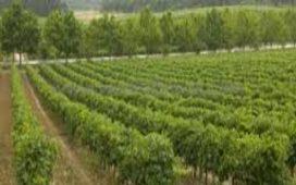 Целта е по-голям брой земеделски стопани да се възползват от възможностите на програмата. Националната програма се прилага като финансов инструмент в България за периода 2008/2009 – 2013/2014г.