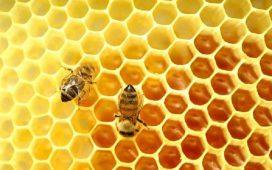 """Тази седмица ДФ """"Земеделие"""" изплаща 582 000 лева по пчеларската програма"""