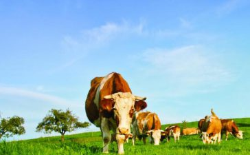 79 млн. лв. са изплатените субсидии на животновъдите по подадени 21 220 заявления.