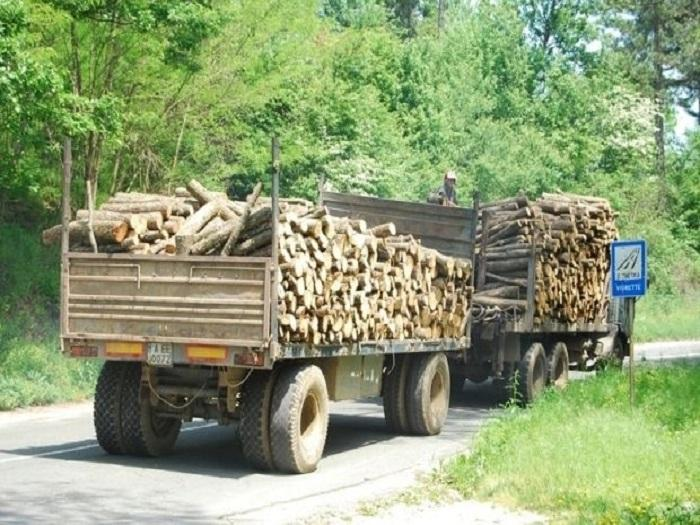 Конфискувани 3 камиона за превоз на незаконна дървесина