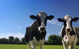 От началото на 2016 г. изкупните цени на млякото в Латвия са паднали с 19