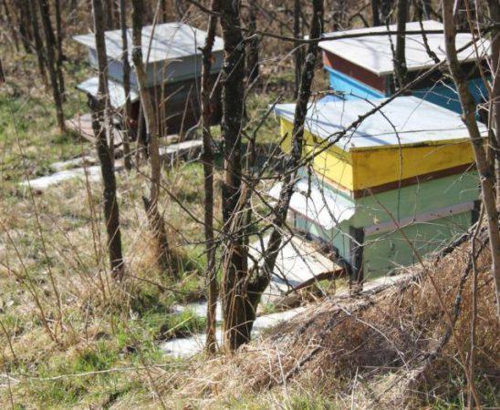 Крайният срок за всички плащания към пчеларите за прием 2015 г. е 15 октомври 2015 г.