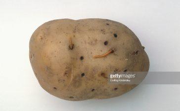 Допълнителни 631 хил. лева за борба с телените червеи при картофите
