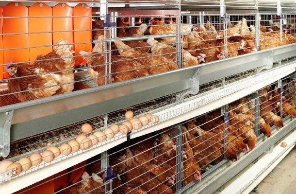 Открито е огнище на птичи грип в добричка птицеферма