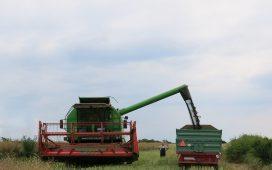 Уникална двойна застраховка за рапица от Синджента за българските фермери през есенната кампания 2018