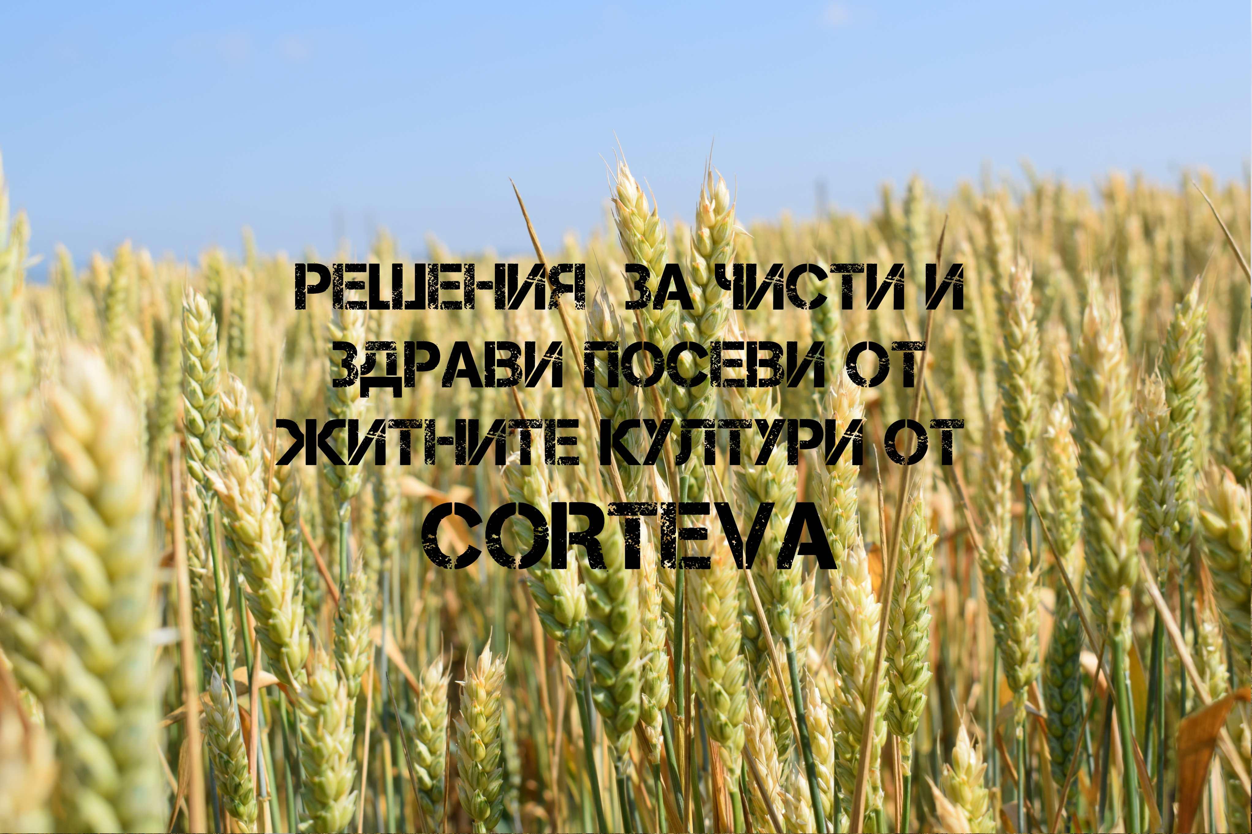 Corteva™ agriscience всъщност обединява трите бранда - Dow AgroSciences, DuPont Растителна Защита и DuPont Pioneer Семена