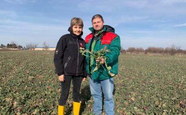 Грижи за рапицата през пролетта - Бюлетин растителна защита 2 / 2019