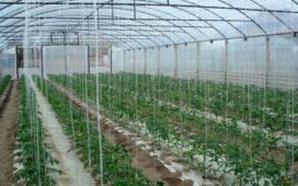 По схемата за обвързано подпомагане за оранжерийни зеленчуци за 2018 г. субсидията, която фермерите ще получат е в размер на 17 021,85 лева на хектар.