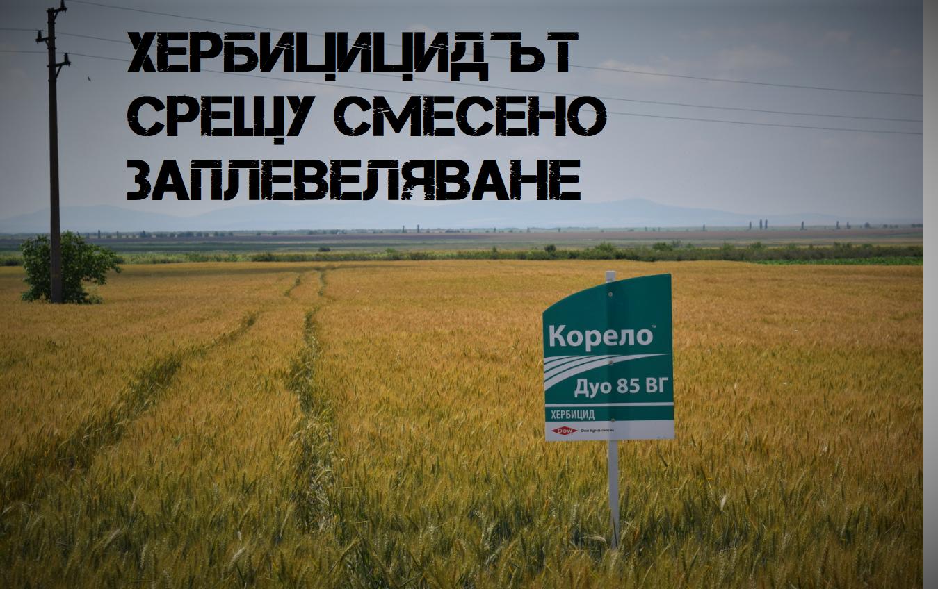 Корело® Дуо 85 ВГ - Икономически изгодният хербицид за смесено заплевеляване при пшеница