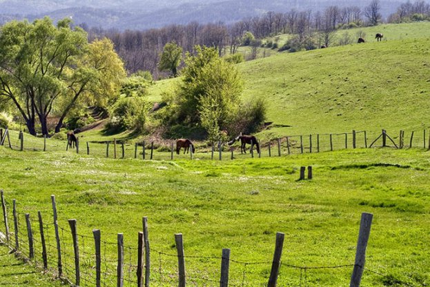 ДФЗ преведе 450 млн. лв. по схемата Зелени Директни Плащания на 58 хиляди фермери