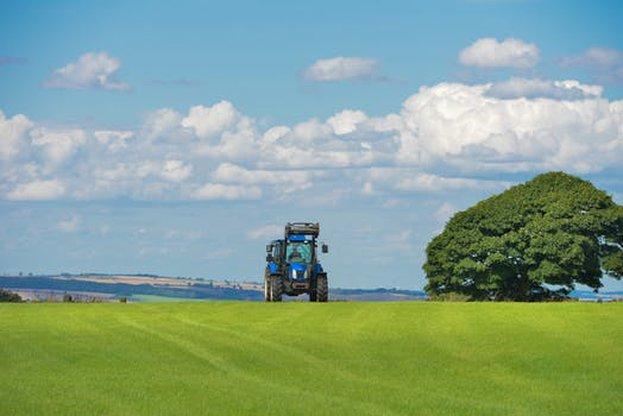Хлебната пшеница се търгува с 24,5% по-скъпо спрямо 2018, а фуражната – с 20%.