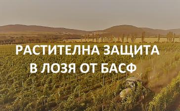 Eфективната растителна защита в лозята от БАСФ