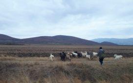 Вижте условията за подпомагане чрез минимална помощ от типа de minimis за животновъдство