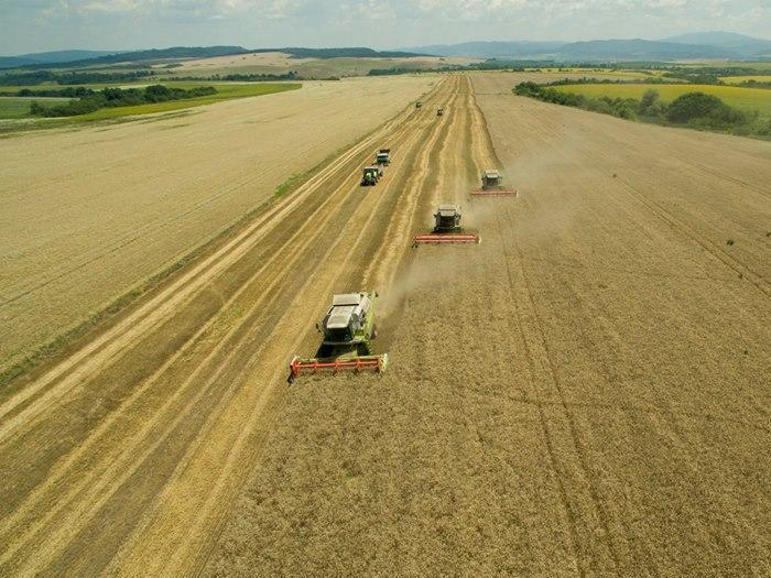 Добиви пшеница 2019 в началото на жътвата
