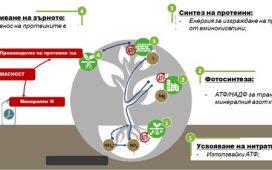 Оптимално подхранване на есенни култури