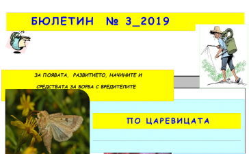 Вредители по царевицата през юли - Бюлетин растителна защита 3 2019