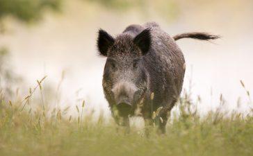 Курс за ловци организира Ловното стопанство в гр. Стралджа
