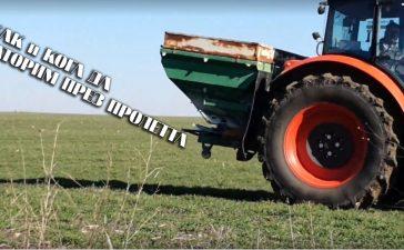 Торене на пшеница
