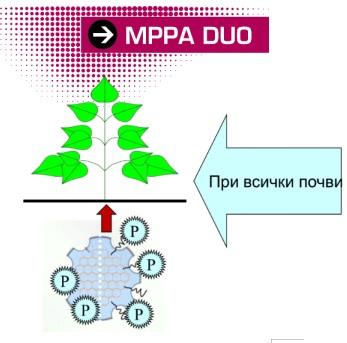 mppa duo